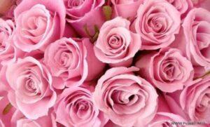 màu hồng trong tiếng anh