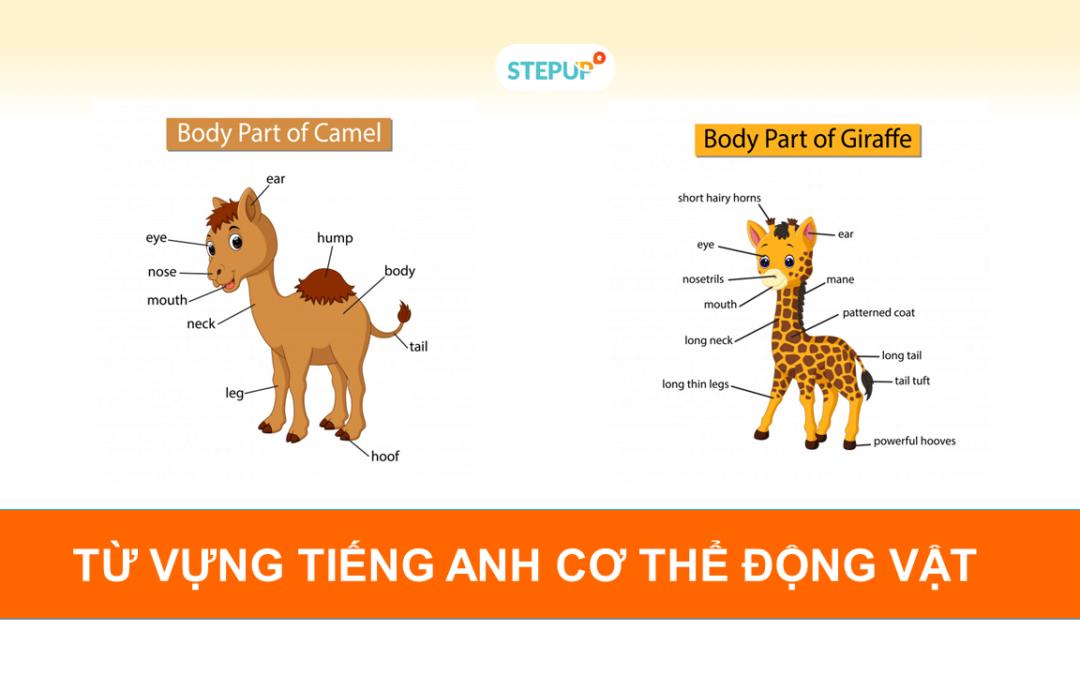 Ghi nhớ siêu tốc từ vựng tiếng Anh về cơ thể động vật