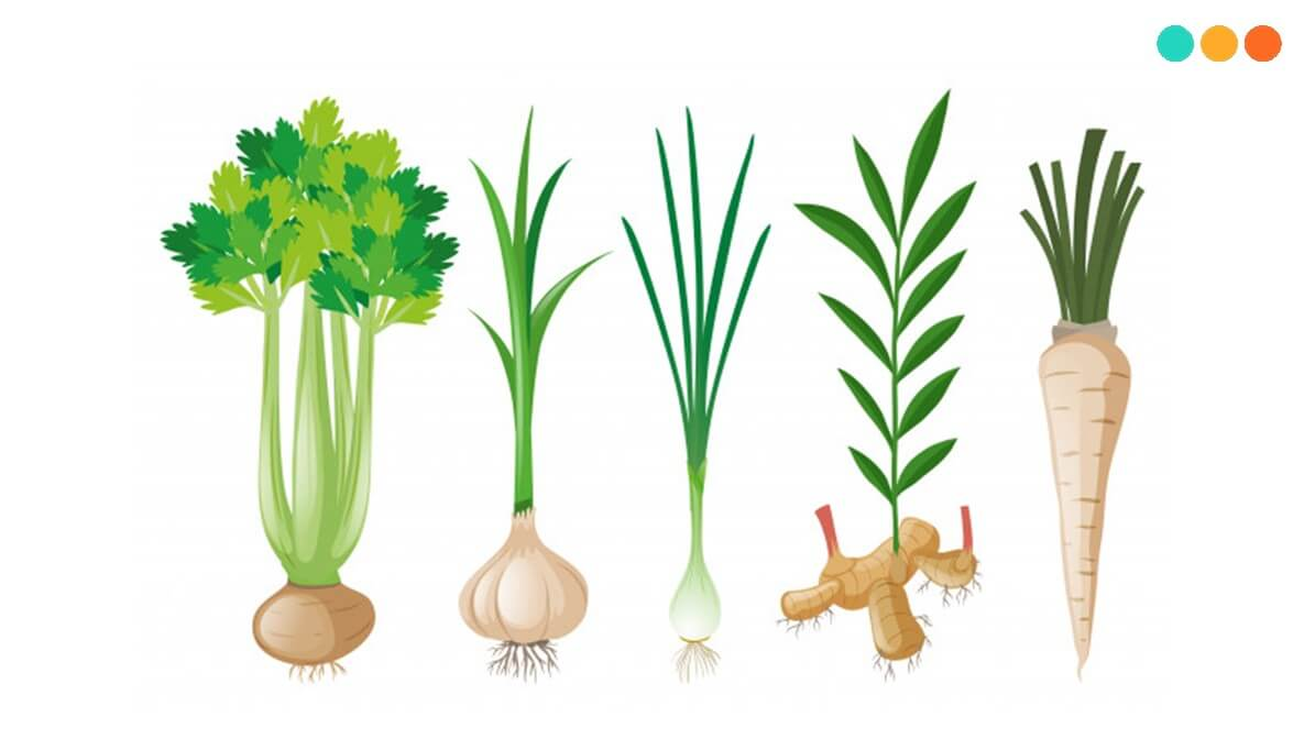 Từ vựng tiếng Anh về rau củ
